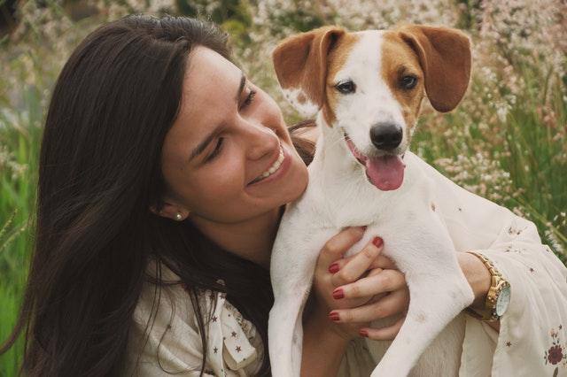 jack russel hond