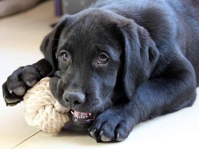 Hoe kun je een pup het bijten afleren?