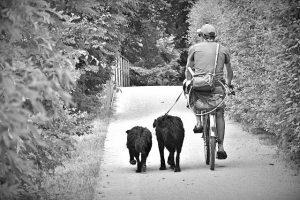 Veilig fietsen met hond