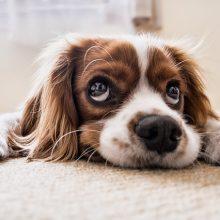 waarom snuffel honden aan de urine van andere honden