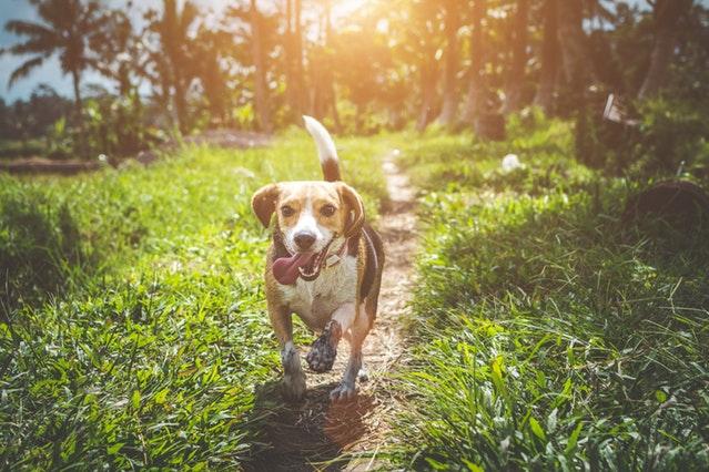 Wanneer is een hond gelukkig?