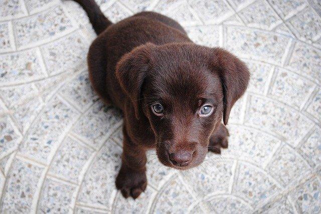 Schattige honden